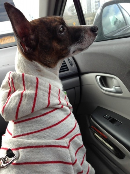 Car Larry in American Apparel Dog Hoodie - Dori's Shiny Blog